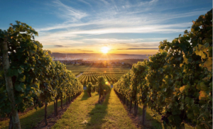 Global Wine Forecast, 2019 — 2024